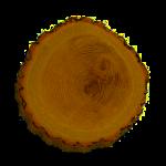 plaster drewna z wycinki drewna warszawa