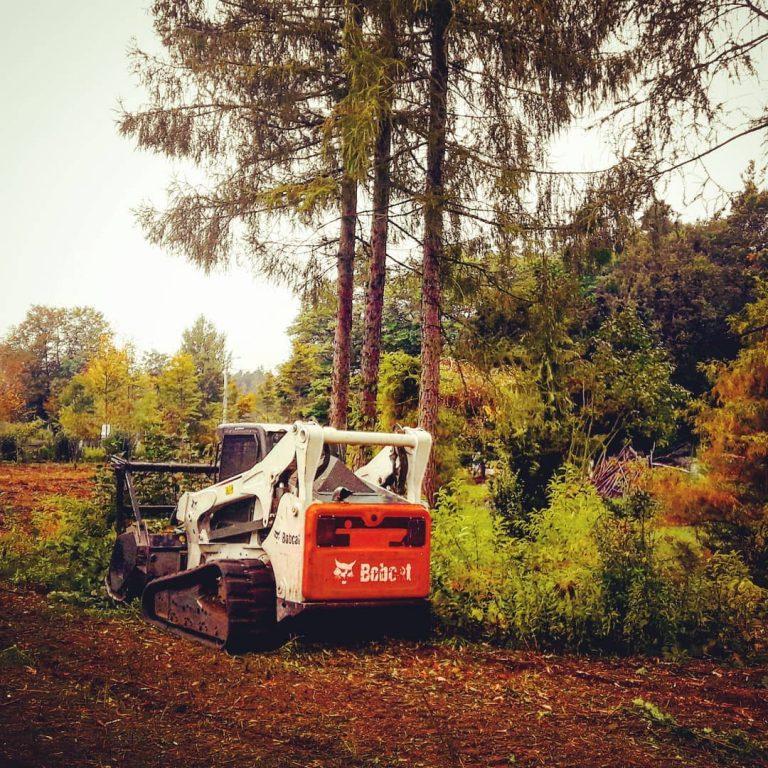 wycinka drzew mulczerem warszawa