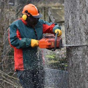 wycinka drzew metodą tradycyjną warszawa