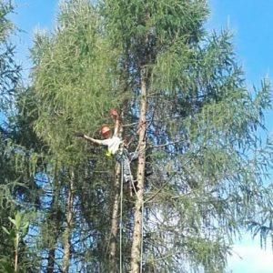wycinka drzew metodą alpinistyczną w warszawie
