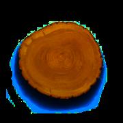 pieniek drewniany, wycinanie drzew warszawa